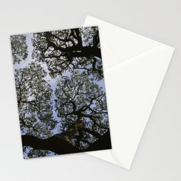 Oak Tree Reaching For The Sky Stationery Cards