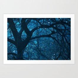 Magic Woods Art Print