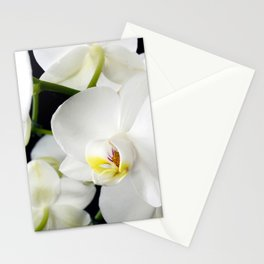 White Orchids Flowers Stationery Cards