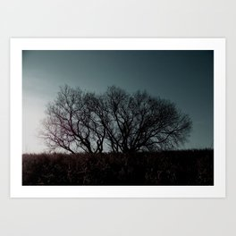Single Tree Art Print