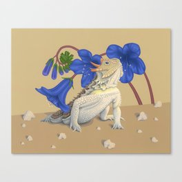 Coast Horned Lizard Canvas Print