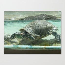 Aquatic life in Colorado Canvas Print