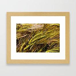 Golden Wheat Field Framed Art Print