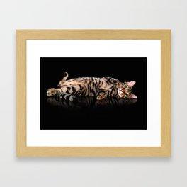 Bengal cat / Kitten on black Framed Art Print