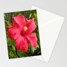 Flower in the Rain Stationery Cards