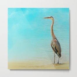 Wading - Blue Heron - Wildlife Metal Print