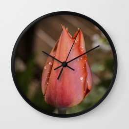 Orange Tulip raindrop's Wall Clock