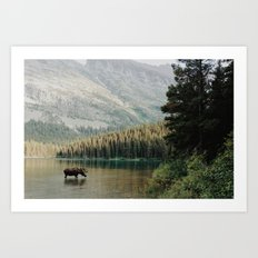 Bull Moose at Swiftcurrent Lake Art Print