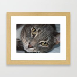 Jumpy the Cat Framed Art Print
