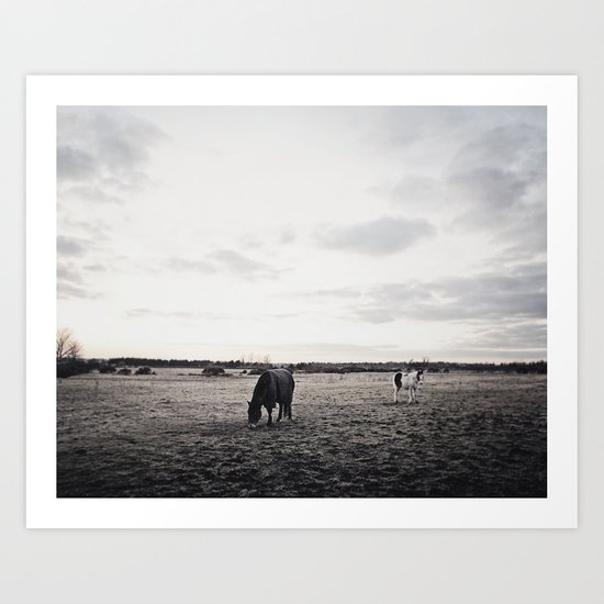 Horses in a Field in Black and White Art Print