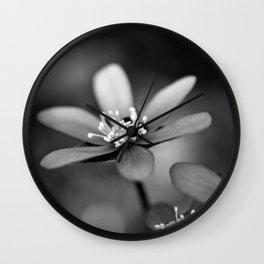 Blue spring flower Hepatica in bw Wall Clock