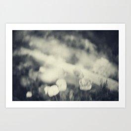 Poppy 2 Art Print