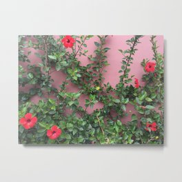 Blooming red hibiscus flowers against a mauve wall Metal Print