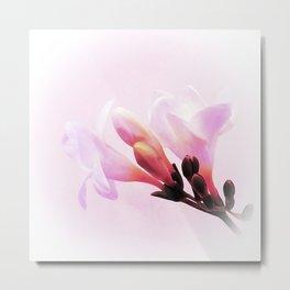 Pink freesia Metal Print