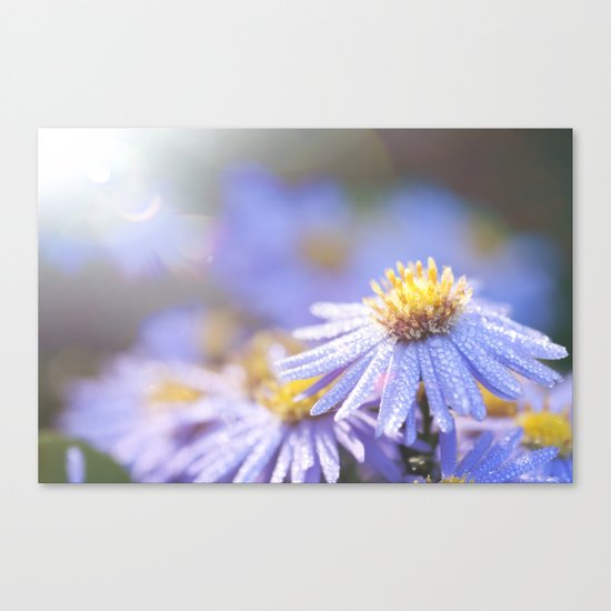 Blue Aster in LOVE I Canvas Print