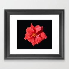 Red Hibicus DPG150523 Framed Art Print