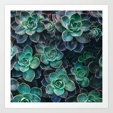 Succulent Blue Green Plants Art Print
