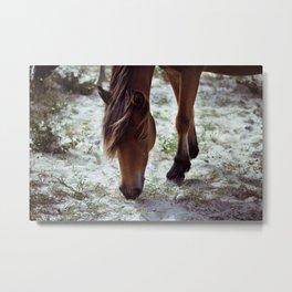 Grazing Pony Metal Print