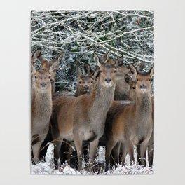 Herd Of Deer Poster
