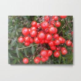 Red Nandina Berries Metal Print