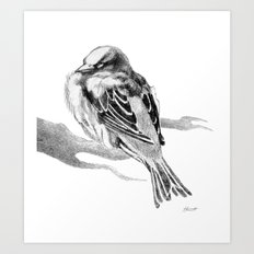 Sparrow Bird Snoozing Art Print