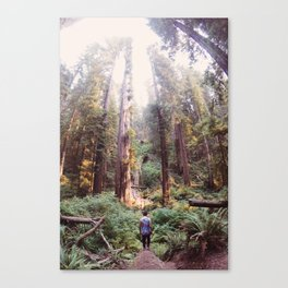 Redwood Dreams Canvas Print