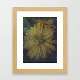 Crazy Daisy Framed Art Print