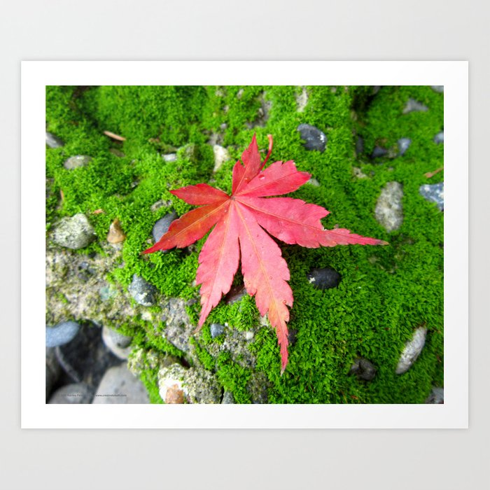 Leaf Zen Art Print