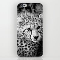 cheetah iPhone & iPod Skins featuring Cheetah by Mark Nelson