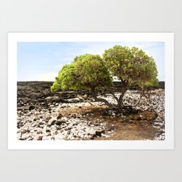Hawaiian Tree Aroudn Lava Rocks Art Print
