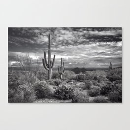 The Sonoran Desert in Black and White Canvas Print