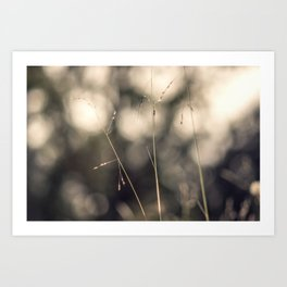 Branch in the forest Art Print