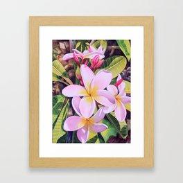 Hawaiian Plumerias Framed Art Print