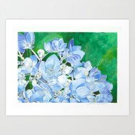 Watercolor Hydrangea Blossoms Art Print