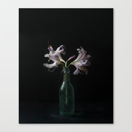 Resurrection Lily in a Vintage Bottle Canvas Print
