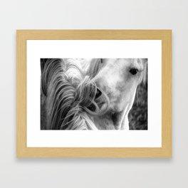 Horse Grooming Framed Art Print