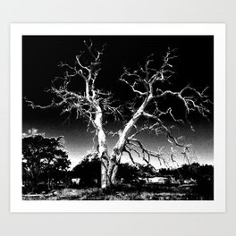Biloxi Tree Art Print