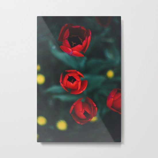 Red roses yellow Metal Print