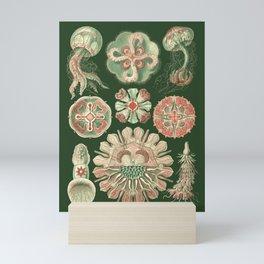 Ernst Haeckel Discomedusae Jellyfish Mini Art Print