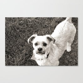 Fudge black and white Canvas Print