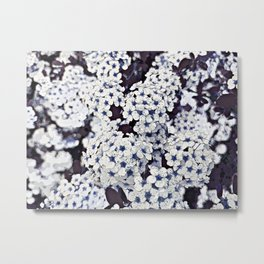 Bush of wild flowers in white and blue, flora altered photography Metal Print