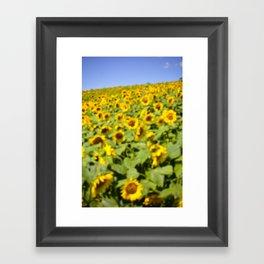 Summer Sunflower Love II Framed Art Print