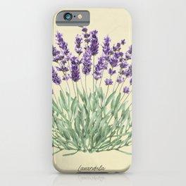 Vintage botanical print - Lavender iPhone Case