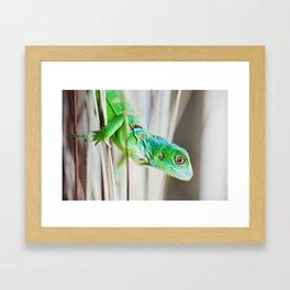 Green Iguana Framed Art Print