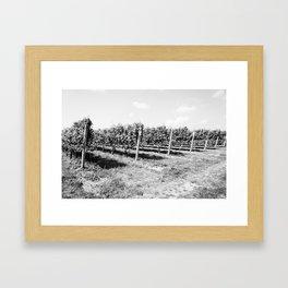 Field of Grapes Framed Art Print
