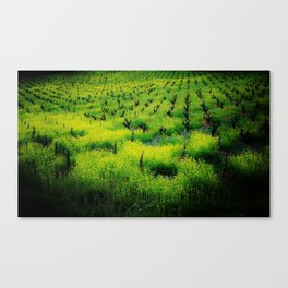 All Vines Lead To.. Canvas Print