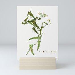 Smilax (Smilax aspera) from Traité des Arbres et Arbustes que l'on cultive en France en pleine terre Mini Art Print