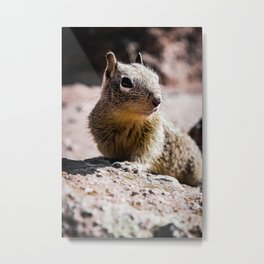 Squirrel on the Rocks Metal Print