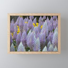 Australian Foxtail Flower Framed Mini Art Print