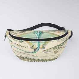 Vintage Fish Diagram // Poissons II by Adolphe Millot XL 19th Century Science Textbook Artwork Fanny Pack